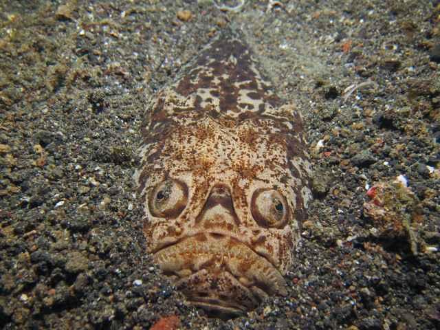 pez astrónomo