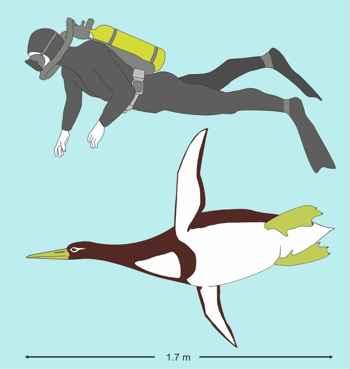 comparación del pingüino Kumimanu biceae