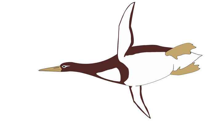 pingüino Kumimanu biceae