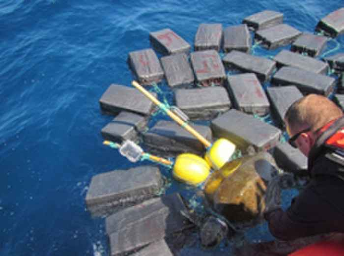 rescate de tortuga marina enredada en droga