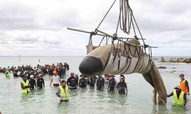 salvamento de una ballena varada