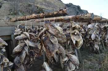 secadero de bacalao en las islas Lofoten