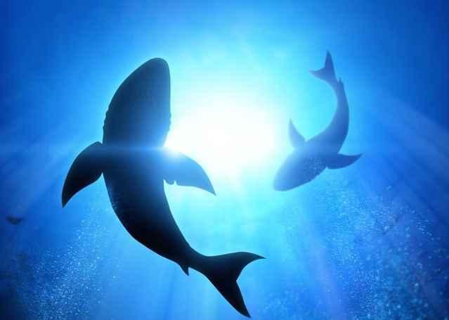 electrorecepción en los tiburones