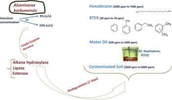 limpieza de petróleo con Alcanivorax borkumensis