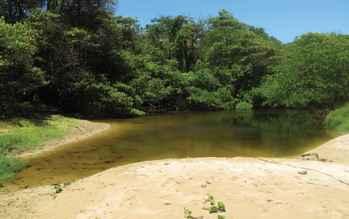 Poecilia vivipara, hábitat en Fernando de Noronha