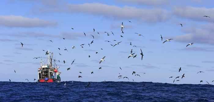 albatros contra la pesca ilegal