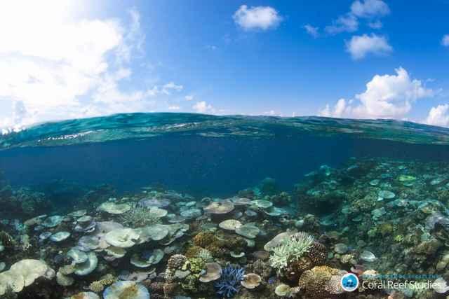 arrecife de coral blanqueado