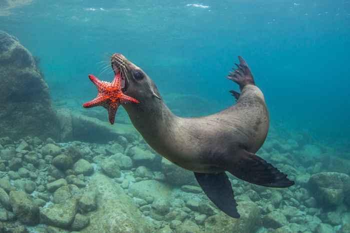 foca y estrella de mar