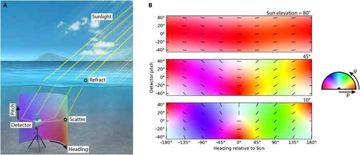 patrones de polarización en el agua