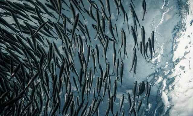 peces y cambio climático