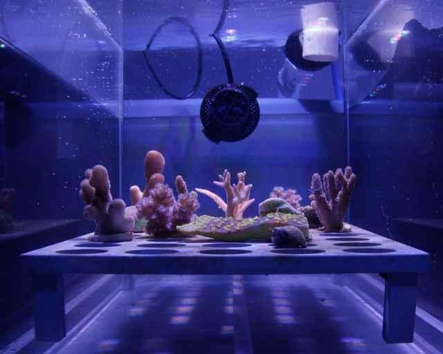 película ecológica para proteger los arrecifes de coral
