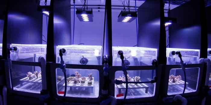pruebas de película ecológica para proteger los arrecifes de coral