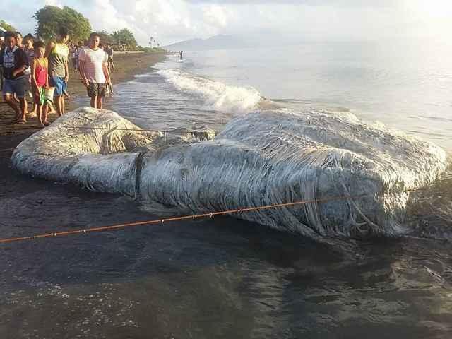 criatura peluda varada en Filipinas