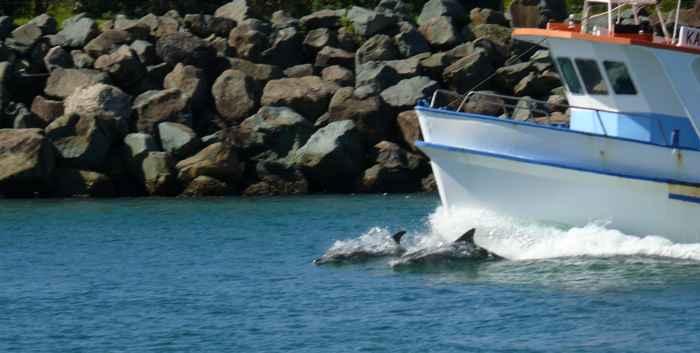 delfines montando a proa