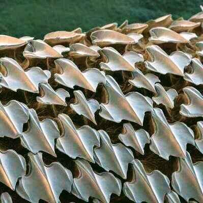 dentículos de tiburón