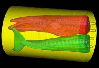 escaner CT de ballena minke