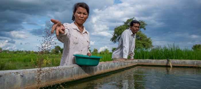 granja de peces en Camboya