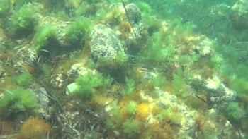 malas hierbas marinas
