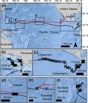 migración de un tiburón ballena