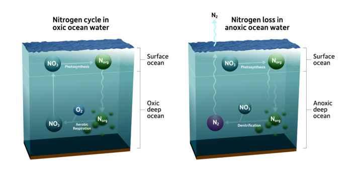 nitrógeno en el agua de mar