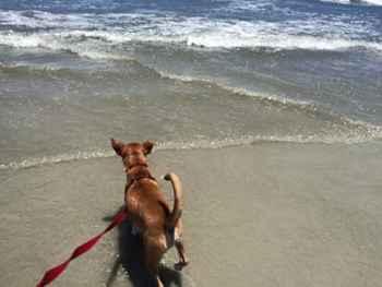 perro en la playa con correa