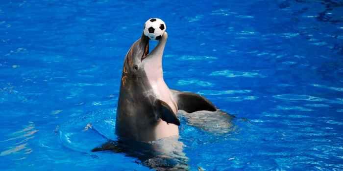 delfín juega con una pelota
