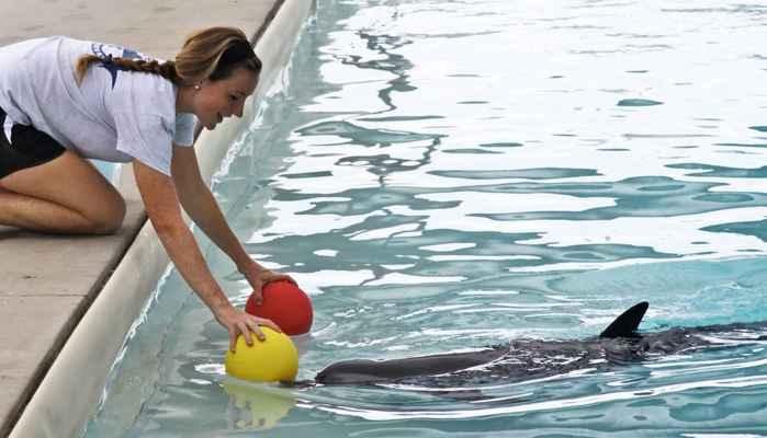 entrenadora juega con un delfín