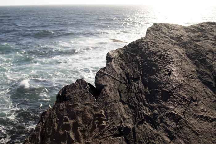 fósiles del Ediacara en Mistaken Point
