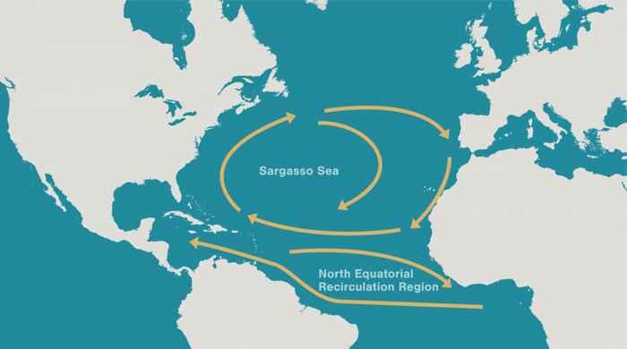 mapa de corrientes en el Mar de los Sargazos