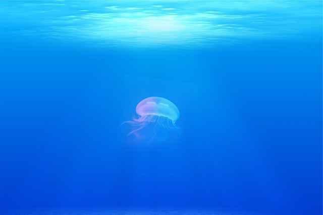medusa en un océano poco oxigenado