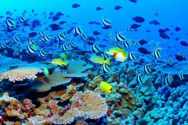 Parque Natural de los Arrecifes de Tubbataha, Filipinas