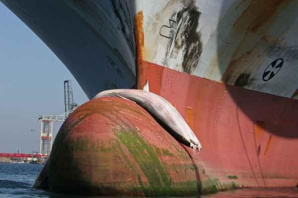 ballena en la proa de un buque