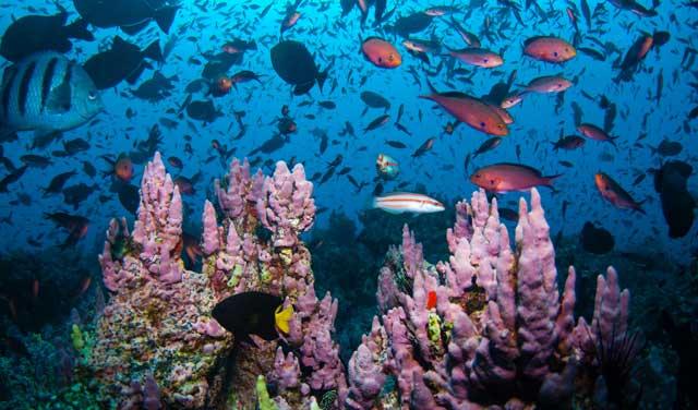biodiversidad en alta mar