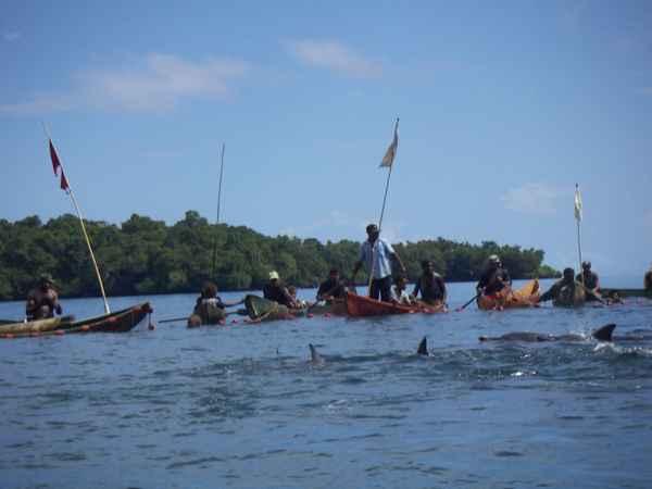 cacería de delfines en Malaita