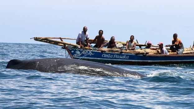 caza de ballenas en Lamalera