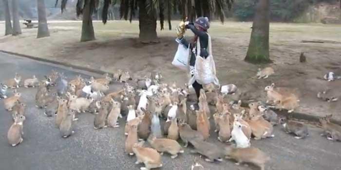 conejos de la isla de Okunoshima