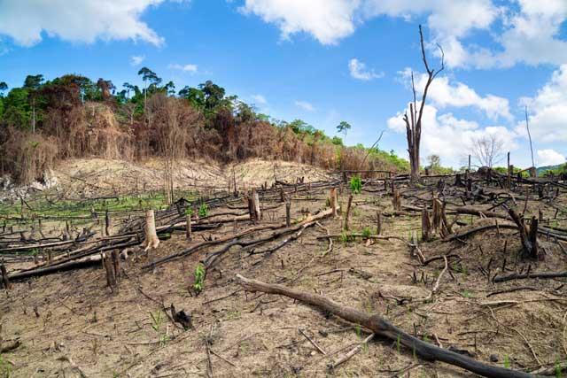 deforestación en Filipinas