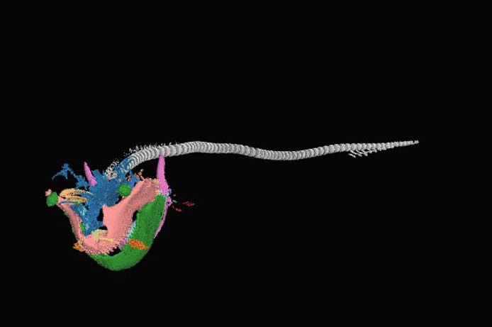 escaner en alta resolución de un tiburón de bolsillo