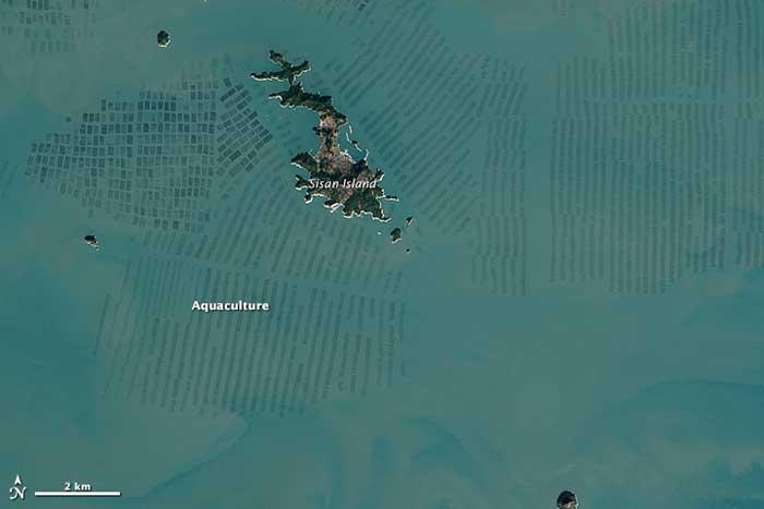 granjas de algas en Corea del Sur