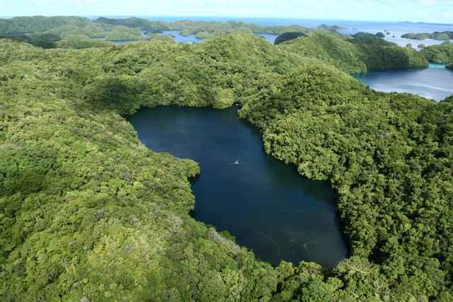 lago de las Medusas, Palau