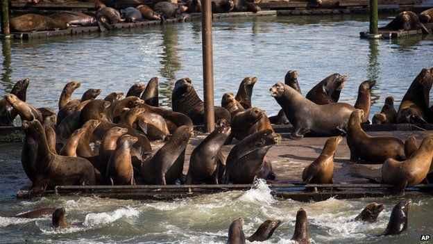 lobos marinos en el puerto de Astoria