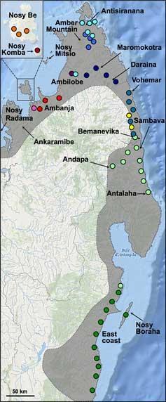 localización de poblaciones de camaleón pantera en Madagascar