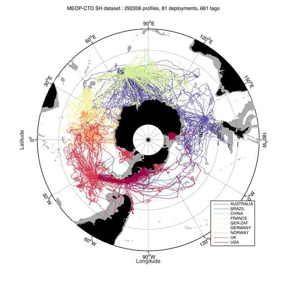 movimiento de las focas con transmisores
