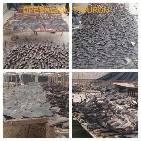 operaciónn tiburón en Ecuador
