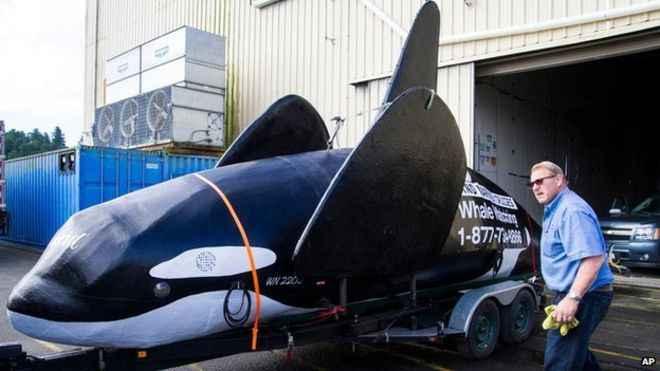 orca falsa para asustar a lobos marinos en el puerto de Astoria