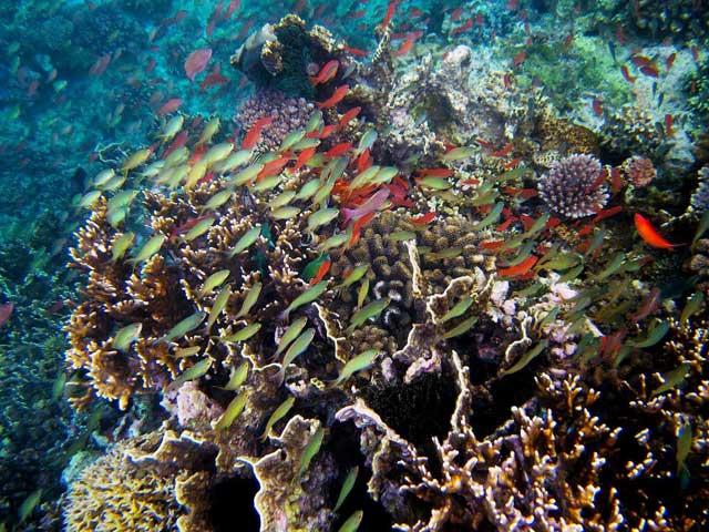 Pasaje de Isla Verde, Filipinas