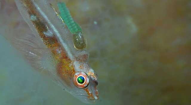 pequeño pez