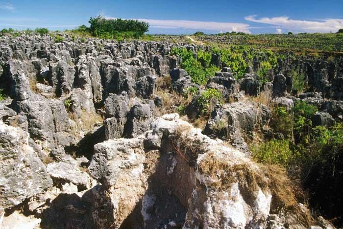 pilares de coral en Nauru