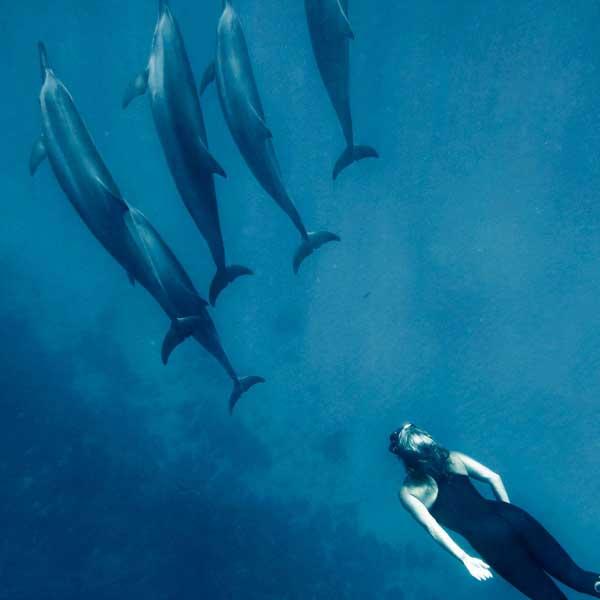 Susan Casey nadando con delfines