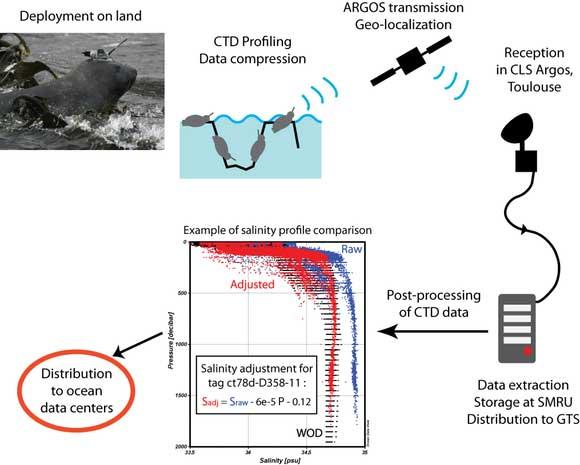 tecnología de seguimiento de mamíferos marinos